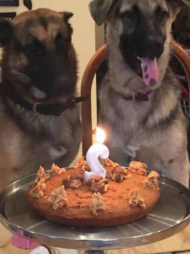 Excellent Dog Birthday Cake Recipe Mikayla Cherise Personalised Birthday Cards Akebfashionlily Jamesorg